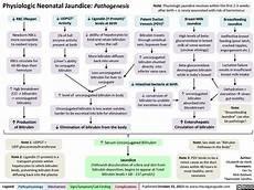 Pathophysiology Of Jaundice In Flow Chart Physiologic Neonatal Jaundice Pathogenesis Calgary Guide
