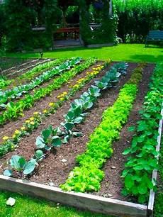 Free Gardening Plans Perfect Backyard Vegetable Garden Design Plans Ideas