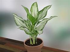 Low Light Stem Plants How To Care For Indoor Plants 15 Steps With Pictures
