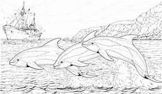 malvorlagen delfin kostenlos malvor