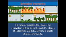 Secondary Succession Ecological Succession Secondary Succession Youtube