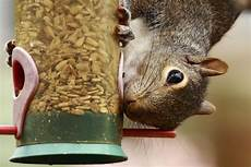 easy tips to keep squirrels out of bird feeders