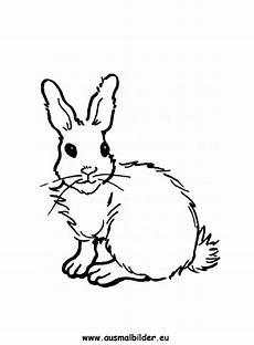 Hase Malvorlagen Lengkap Ausmalbilder Hase Hasen Malvorlagen