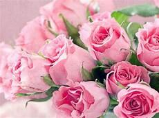 flower wallpaper for desktop free fresh flowers bouquet of pink roses hd desktop backgrounds