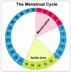The Bump Ovulation Chart Ovulation Calculator For Baby Boy How It Works Legit Ng