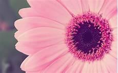 flower wallpapers for pc desktop floral desktop backgrounds wallpaper cave