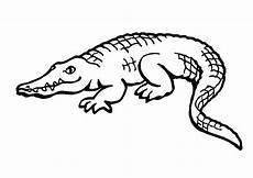 ausmalbilder krokodil kostenlos malvorlagen zum
