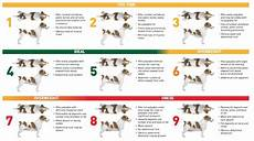 Ideal Weight For Dogs Weight Chart Is Your Pet A Healthy Weight Lubrisynha
