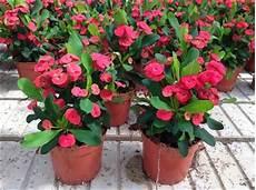 pianta grassa da interno 10 piante grasse da appartamento quali scegliere e come