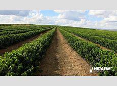 Iconic Israeli company Netafim sold for $1.5 billion