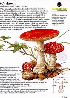 Collins How To Identify Edible Mushrooms Patrick Harding