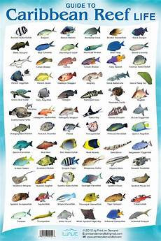 Reef Fish Identification Chart Coral Reef Fish Species Fishes You Can See While