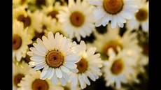 immagini piã di fiori primavera melodia rilassante di primavera con bellissime