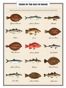 Maine Fish Species Chart Counting Fish Estimating The Gulf Of Maine S Fish