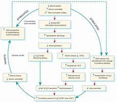 Adh Vs Aldosterone Venn Diagram Role Of Adh Angiotensin And Aldosterone In Osmoregulation