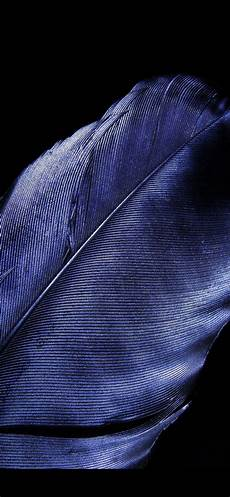 iphone blue feather wallpaper wallpaper blue feather up black background