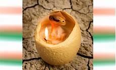 candele strane le candele uovo di dinosauro si schiudono quando