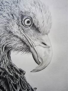 eagle pencil drawing eagle drawing animal drawings