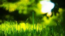 4k wallpaper backgrounds 4k resolution wallpaper 16 9 grass 4096 215 2304 by