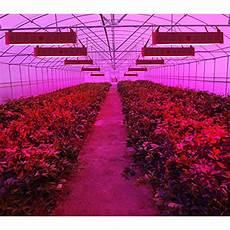 Led Lights Greenhouse King Plus 2000w Double Chips Led Grow Light Full Spectrum