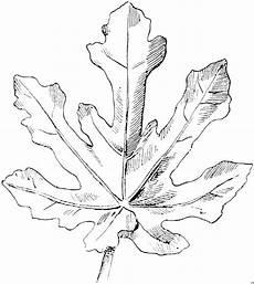 Malvorlagen Ausmalbilder Ahornblatt Ahornblatt Ausmalbild Malvorlage Blumen