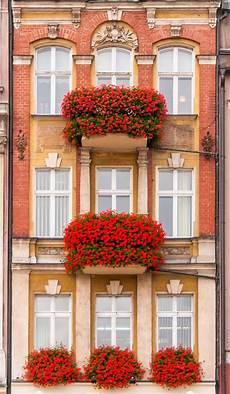fioriere da davanzale 20120924 dsc0613 fioriere per davanzale fiori da