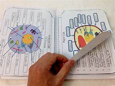 Cell Cycle Flip Book Structure Of Life Interactive Notebook Inb Pages