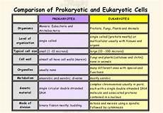 Difference Between Prokaryotic And Eukaryotic Difference Between Eukaryotic Cell And Prokaryotic Cell