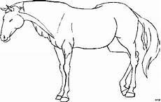 einfach stehendes pferd ausmalbild malvorlage tiere