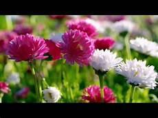 best flower desktop wallpaper flower wallpaper hd