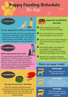 Puppy Food Chart By Age Puppy Feeding Schedule Look At The Chart Follow The Tips