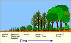 Secondary Succession Quia Primary And Secondary Succession