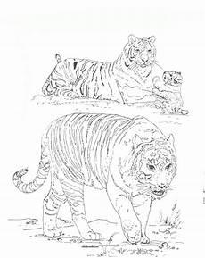 Tiger Malvorlagen Zum Ausdrucken Kostenlos Ausmalbilder Zum Drucken Malvorlage Tiger Kostenlos 2