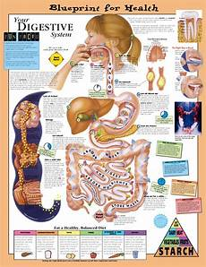 Healthy Chart Blueprint For Health Your Digestive System Anatomical