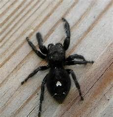 Oklahoma Spiders Identification Chart Mice Plug In Wall Images Of Bed Bug Bites On Toddlers