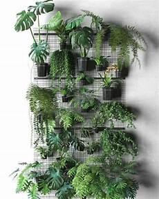 plantas penduradas ao ar livre a imagem pode conter planta 225 rvore e atividades ao ar