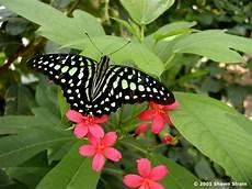 Mariposas Y Flores Las Flores Y Mariposas