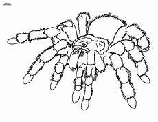 Malvorlagen Spinnen Spinne Ausmalbilder Mit Bildern L 246 Wen Malvorlagen