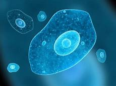 Protista Examples Examples Of Protists Biology Wise