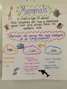Animal Chart For Kindergarten Mammal Anchor Chart We Just Created This Last Week The