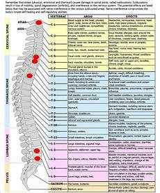 Varicose Vein Size Chart Nerve Chart Related To Body Functions Spinal Nerve