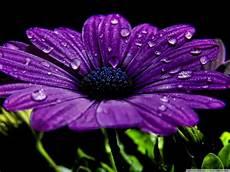 flower wallpaper 31 jpg beautiful purple flower hd desktop wallpaper high