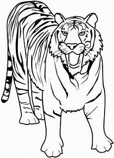 tiger ausmalbilder ausmalen ausmalbilder tiere
