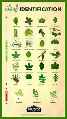 Oak Leaf Id Chart Leaf Identification Infographic Survival Stronghold