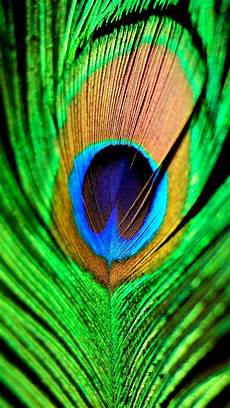 iphone blue feather wallpaper peacock feather green blue iphone 6 plus hd wallpaper