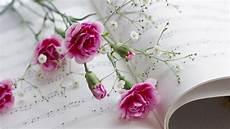 Flower Wallpaper Song by Rosafarbene Blumen Und Musik Wallpaper Allwallpaper In