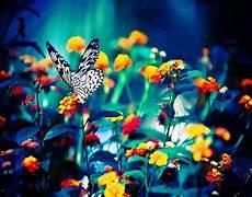 Mariposas Y Flores Las Fotos Mas Alucinantes Mariposa Y Flores