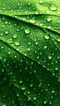 Iphone Wallpaper Hd Green by Green Leaf Wallpaper Hd 70 Images
