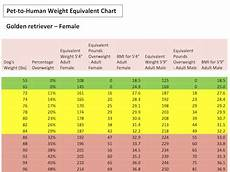 Golden Retriever Average Weight Chart Rover Com Blog How Much Would You Weigh If You Were Your Dog