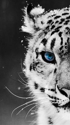 black and white tiger iphone wallpaper tiger wallpaper for iphone animals animals beautiful
